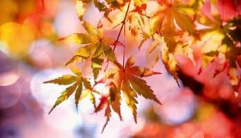 À la Une de l'automne de l'immobilier neuf
