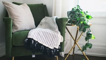 Décoration intérieure : misez sur les plantes tombantes