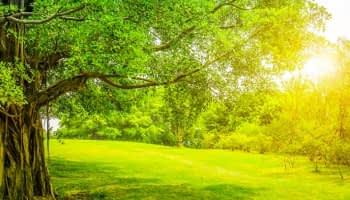 Les Français ont envie de vert : le moral des paysagistes au beau fixe