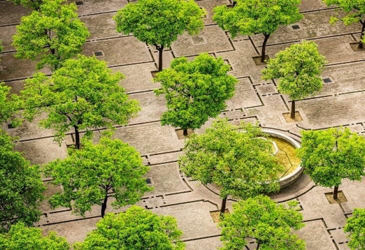 Des arbres en ville pour sauver des milliers de vies