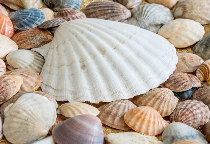 Des pavés en forme de coquillage à Nice pour faire baisser la température