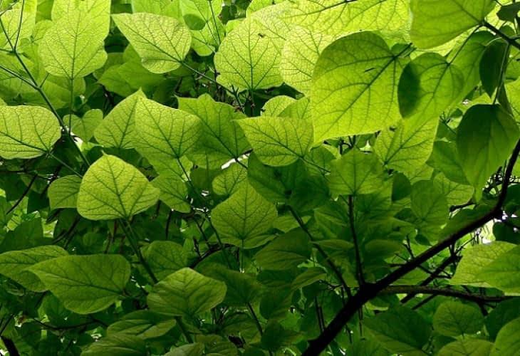 Eco-habitat : les avantages de la toiture végétalisée
