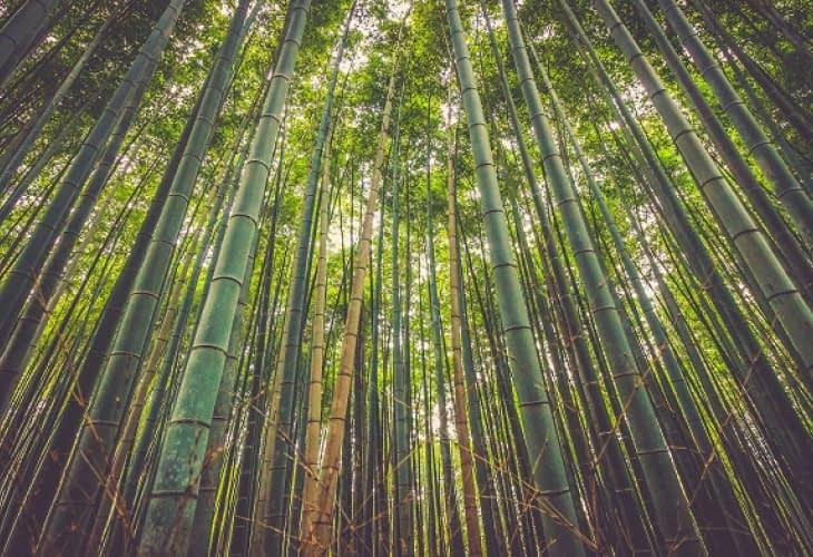 Eco-habitat : ma maison en bambou