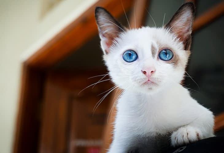 Immobilier insolite : un appartement loué 1 300€... à des chats