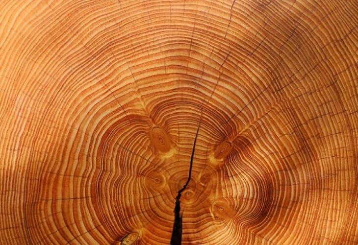Innovation : un nouveau bois écologique pour refroidir les bâtiments