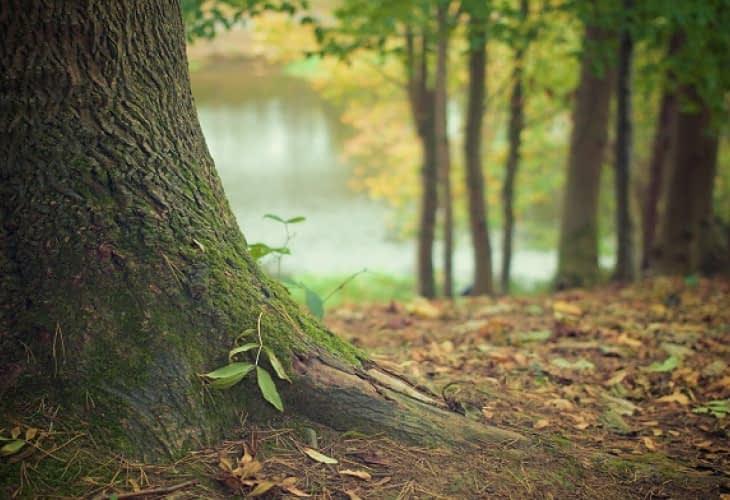 Investissement immobilier : et si vous achetiez une forêt ?