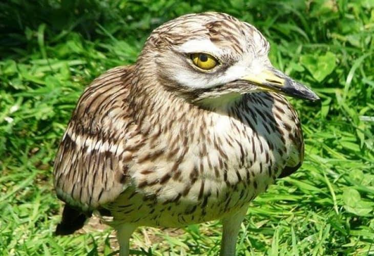 Oiseaux VS programme immobilier neuf à Lyon : 1-0