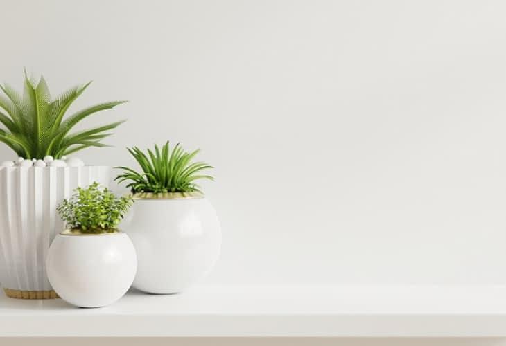 Plantes d'intérieur : le réflexe anti-stress, santé et productivité