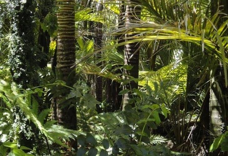 Rock in Rio veut sauver l'Amazonie