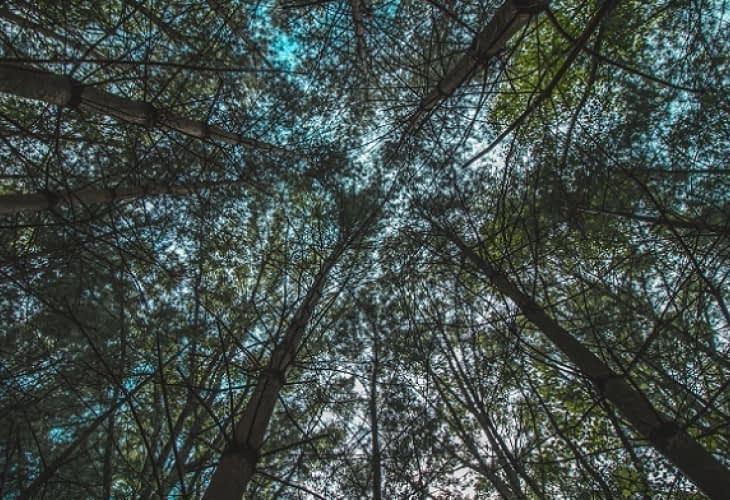 Treetop : une cabane dans les bois de 45 mètres de haut