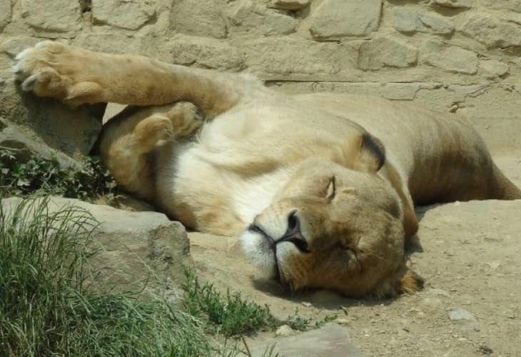 Vente immobilière : offrez-vous un zoo pour 300 000 euros !