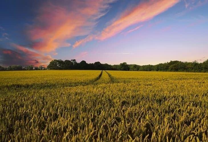 Viabilisation d'un terrain : démarches et coût à prévoir