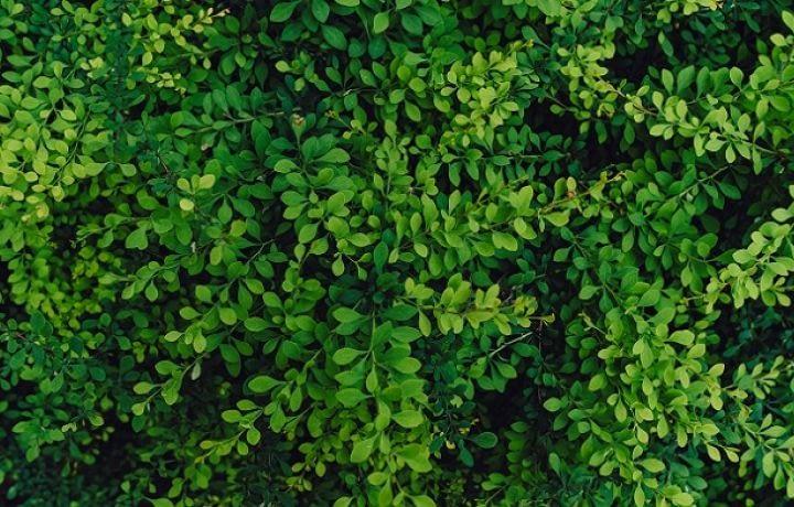 Du minéral au végétal, Bordeaux ville verte