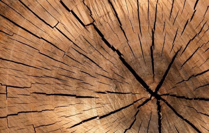 Éco-habitat : Hypérion, une construction en bois test