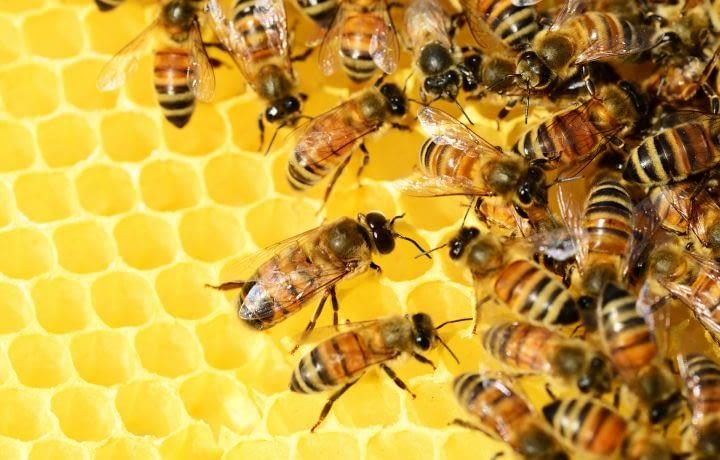 J'installe une ruche dans mon jardin
